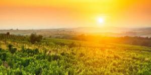 california wine regions