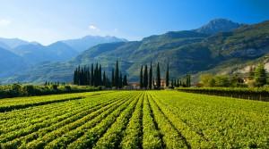 italian chardonnay