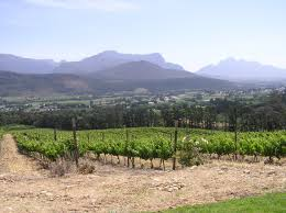 Franschoek vineyard