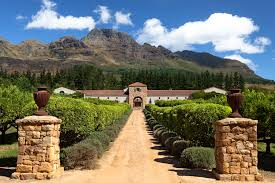 Stellenbosch vineyard