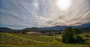 Virginia vineyard