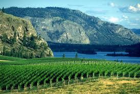 new york state vineyards