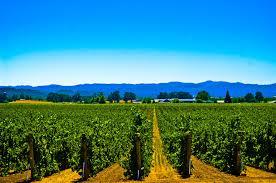 us vinyards