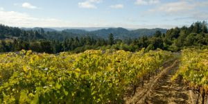 central valley chardonnay reviews