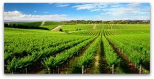 australia wines review