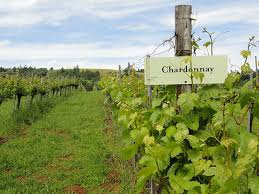 topr rated Chardonnays