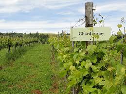 topr rated Chardonnays