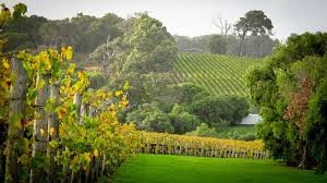 margaret river wine review