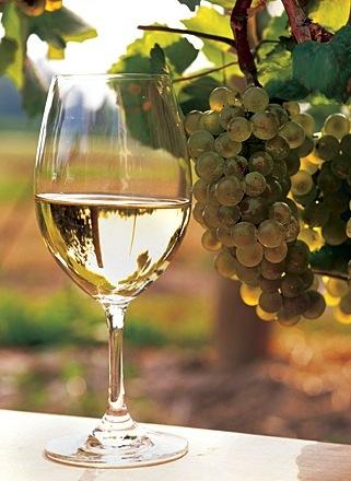 wine chard