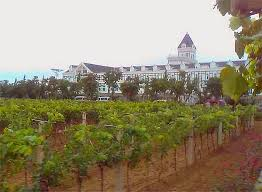 wine country China